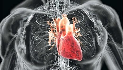 рентген сердца при беременности